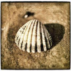 She sells sea shells  beach photo  sandy golden by matthewbull, $25.00