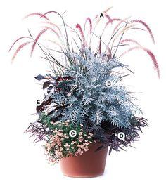 A. Purple fountaingrass (Pennisetum setaceum 'Rubrum') -- 2  B. Dusty miller (Centaurea 'Colchester White') -- 1  C. Diascia 'Sun Chimes Coral' -- 4  D. Alternanthera 'Red Thread' -- 2  E. Caricature plant (Graptophyllum pictum) -- 1