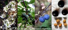 PLANTAR ÁRBOLES y arbustos: Arbustos Autóctonos España
