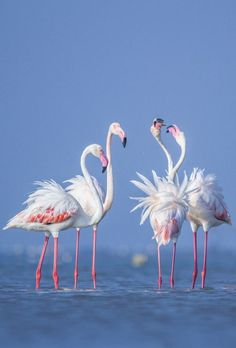 National Geographic Your Shot Flamingo Photo, Flamingo Decor, Pink Flamingos, Tropical Birds, Colorful Birds, Pink Pigeon, Congratulations Photos, Bird Painting Acrylic, Flamingo Pictures