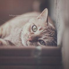 Amores Felinos | Flickr - Photo Sharing!