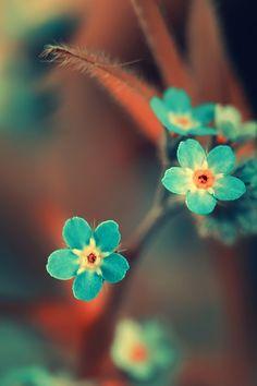 Beautiful Blue Flowers... la belleza así de simple se manifiesta, en silencio.