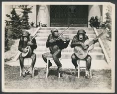 Funny Vintage Chimpanzee Musician Picture