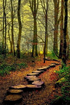 Forest Trail, Westonbirt Woods, England