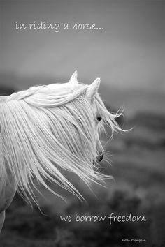 Exemples de citation citation photo de cheval dans un