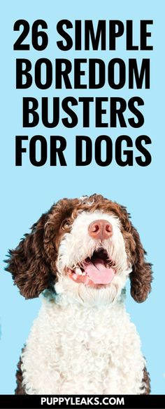 Is your dog bored? Looking for some easy ways to exercise your dog and keep them busy? Here's 26 easy ways to keep your dog busy, happy and entertained. #dogs #dogtips #dogcare #doglife #doglovers #dogadvice #doggames #dogexercise #puppy #puppies