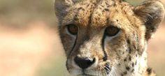 Big 5 Kruger Park Safari Tour. http://www.34southtours.com/big-5-kruger-park-safari-tour.php