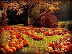 The 'Pumpkin Farm' by Bridges. 611 south of Easton, PA. I want a pumpkin farm! Harvest Time, Fall Harvest, Autumn Fall, Winter, Bountiful Harvest, Autumn Cozy, Hello Autumn, Autumn Leaves, Pumpkin Farm