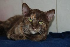 GARA - Gato adoptado - AsoKa el Grande