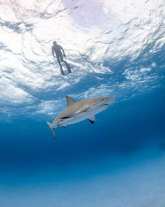 #oceanconservation #saveourseas #oneocean #nature #wildlife #scubadiving #uwphotography #scuba #ocean #oceanlover #idive #oceanlove… Black Tip Shark, Octopus Tattoo Design, Sharks, Snorkeling, Scuba Diving, Airplane View, Travel Inspiration, Whale, Fighter Jets