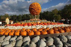 German pumpkin farm - 雅虎香港新聞 - …