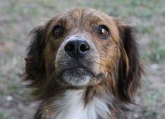 Milo cerca casa! info: adozioni@leudica.org