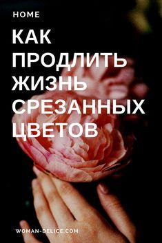 Секреты флориста: как продлить жизнь срезанных цветов – Woman & Delice