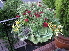 Another great fall planter with requisite mums, peppers, cabbage & kale!