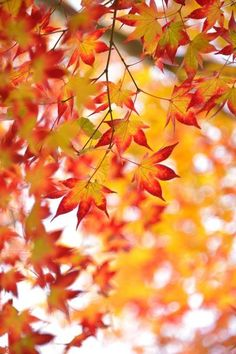 I'm #thankfulfor autumn leaves. It's the prettiest time of the year! #28DaysOfGratitude - Day 4