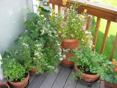 Herbs such as mint, cilantro and parsley mingle with nemesia and cucumber.