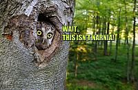 owl everything from owl designs to owl art the owls are here for you. owl be watching Funny Owls, Funny Animals, Cute Animals, Beautiful Owl, Animals Beautiful, Owl Always Love You, Tier Fotos, Mundo Animal, All Gods Creatures