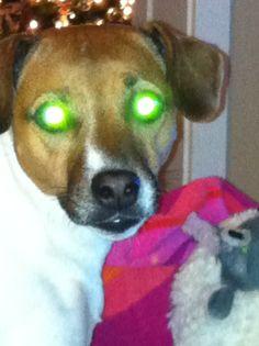 Our Katie. Devil Dog!