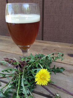 Dandelion Beer // The Forager's Feast
