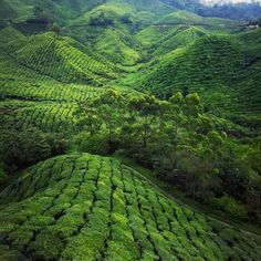Go Green Photo by Natalie T. — National Geographic Your Shot