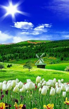Glorious scene with windmill.