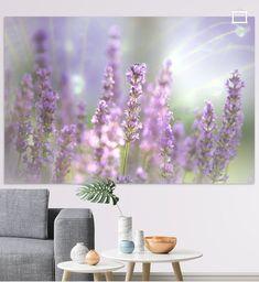 Freundliches leichtes Sommer Bild, feine Lavendelblüten mit Tautropfen auf einer Pusteblume im Hintergrund. Dekorativer Blickfang für Zuhause.