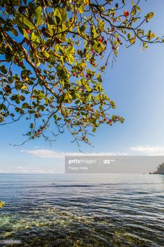 Caribbean Sea Photography #Ad, , #spon, #Caribbean, #Sea, #Photography Sea Photography, Business Powerpoint Presentation, Caribbean Sea, Jamaica, Stock Photos, Beach, Water, Outdoor, Image