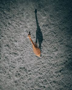 Creative aerial shots by Martin Sanchez a. zekedrone, gifted photographer, adventurer, drone pilot, and visual artist from the USA. Martin focuses on drone… Aerial Photography, Wildlife Photography, Amazing Photography, Photography Ideas, Travel Photography, Shadow Photography, Fotografia Drone, Drones, Drone Quadcopter