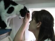 Cattery, Dubai, This Is Us, Pets, Check, People, Animals, Animaux, Animal