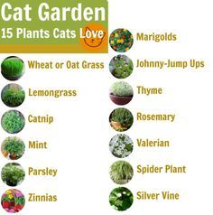 It may be January, but this is the perfect month to start planning your garden, especially if you have to order seeds to be shipped to you and then start them indoors. So why not plan on planting an herb garden just for your favorite felines? There are a number of herbs and plants that cats find tasty and that are good for their nutrition and digestion