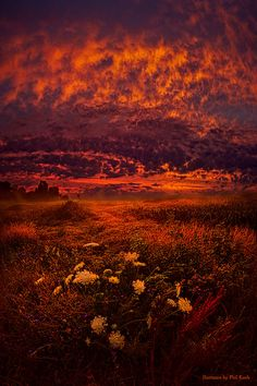 "https://flic.kr/p/oJScxY | Wisconsin Twilight | Wisconsin Horizons by Phil Koch. Lives in Milwaukee, Wisconsin, USA. <a href=""http://phil-koch.artistwebsites.com"" rel=""nofollow"">phil-koch.artistwebsites.com</a> <a href=""https://www.facebook.com/MyHorizons"" rel=""nofollow"">www.facebook.com/MyHorizons</a>"