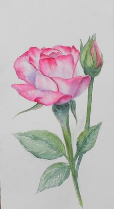 Watercolor Painting Techniques, Watercolor Projects, Painting & Drawing, Watercolor Paintings, Watercolors, Watercolor Rose, Watercolor Cards, Flower Art Drawing, Guache