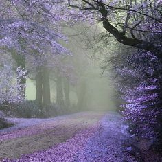 I want to walk down this lane.. lovely