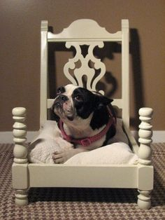 Upcycle chair into dog bed or cat bed. Know a Boston that would look perfect in this.. by turnsole