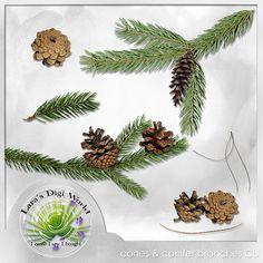 Digital Art :: Element Packs :: Cones & Conifers Vol. 1