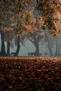 foggy park benches with fallen leaves