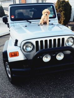 The only thing cuter than this Jeep is that fluffy puppy sitting on top of it <3