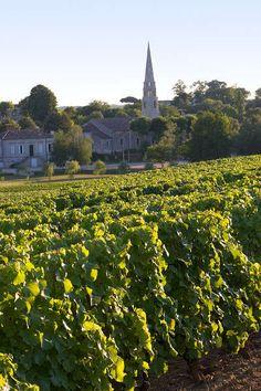 Le vignoble sauternais route des graves route des vins de bordeaux guide du tourisme de la gironde aquitaine