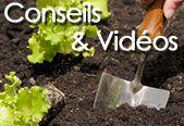 Bien associer les légumes au potager (Fiches conseils)