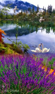 I saw two swans like lovers in the lake. I thought of the legends of magical beings hidden beneath the feathers of a swan. Beautiful Birds, Beautiful World, Beautiful Images, Scenic Photography, Landscape Photography, Nature Photography, Nature Scenes, Nature Wallpaper, Science And Nature