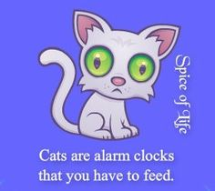 """""""Cats are alarm cats that you have to feed!"""""""