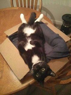 funny-cat-150-26.jpg (900×1200)