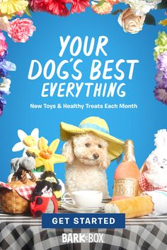 Get off BarkBox today! Praise your pup every month with a box of original toys and treats. Dog Recipes, Low Carb Recipes, Chicken Recipes, Sangria Recipes, Margarita Recipes, Low Card Meals, The Perfect Dog, Sprout Recipes, Enchilada Recipes