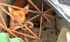 Em Manaus, operação identifica 7 casos de maus-tratos a animais domésticos