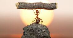 Un photographe s'est passionné pour la vie des fourmis et a décidé d'immortaliser ces insectes travailleurs lors de leurs nombreuses activités. Il a réalisé beaucoup de clichés qu'il a mis en scène avec humour et tendresse. Une collection &agra