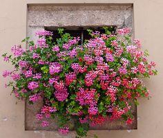 Finestra satura - Full window