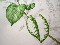 Lizzie Harper watercolour step 2 in painting a leaf