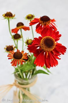 A Bunch for the Weekend - Heleniums. Styling and photography © Ingrid Henningsson for Of Spring and Summer.