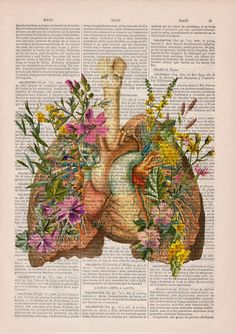 anatomy-illustrations-old-book-pages-prrint-5