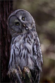 Owl by Lilia73, via Flickr